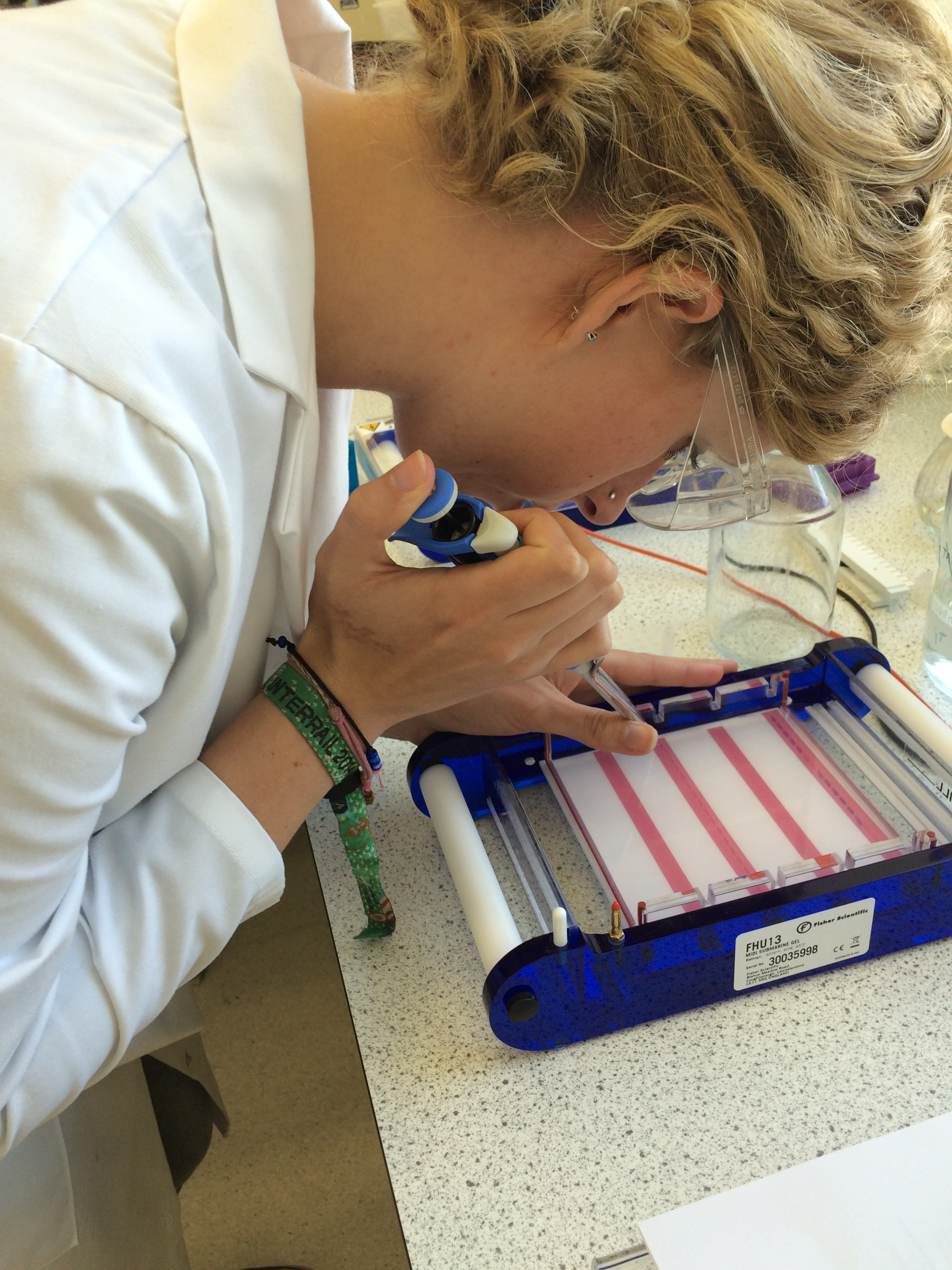 Running electrophoresis gels and pcr using live snail DNA