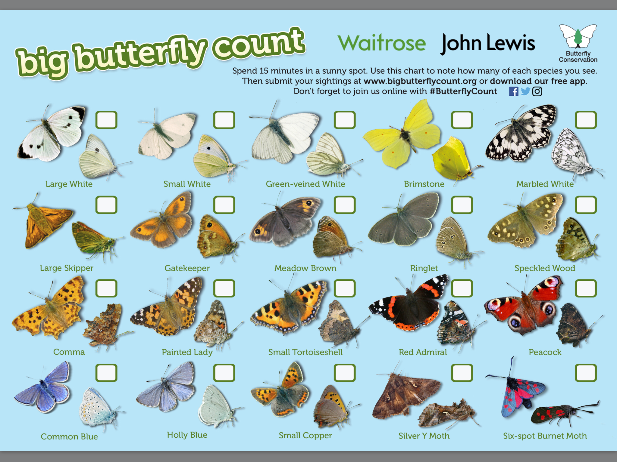Butterfly Identification Sheet
